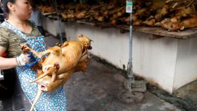 La ciudad china de Yulin celebra estos días su famoso festival de carne de perro.
