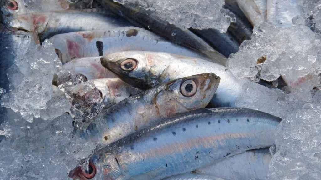 Una imagen de archivo de sardinas para la venta.