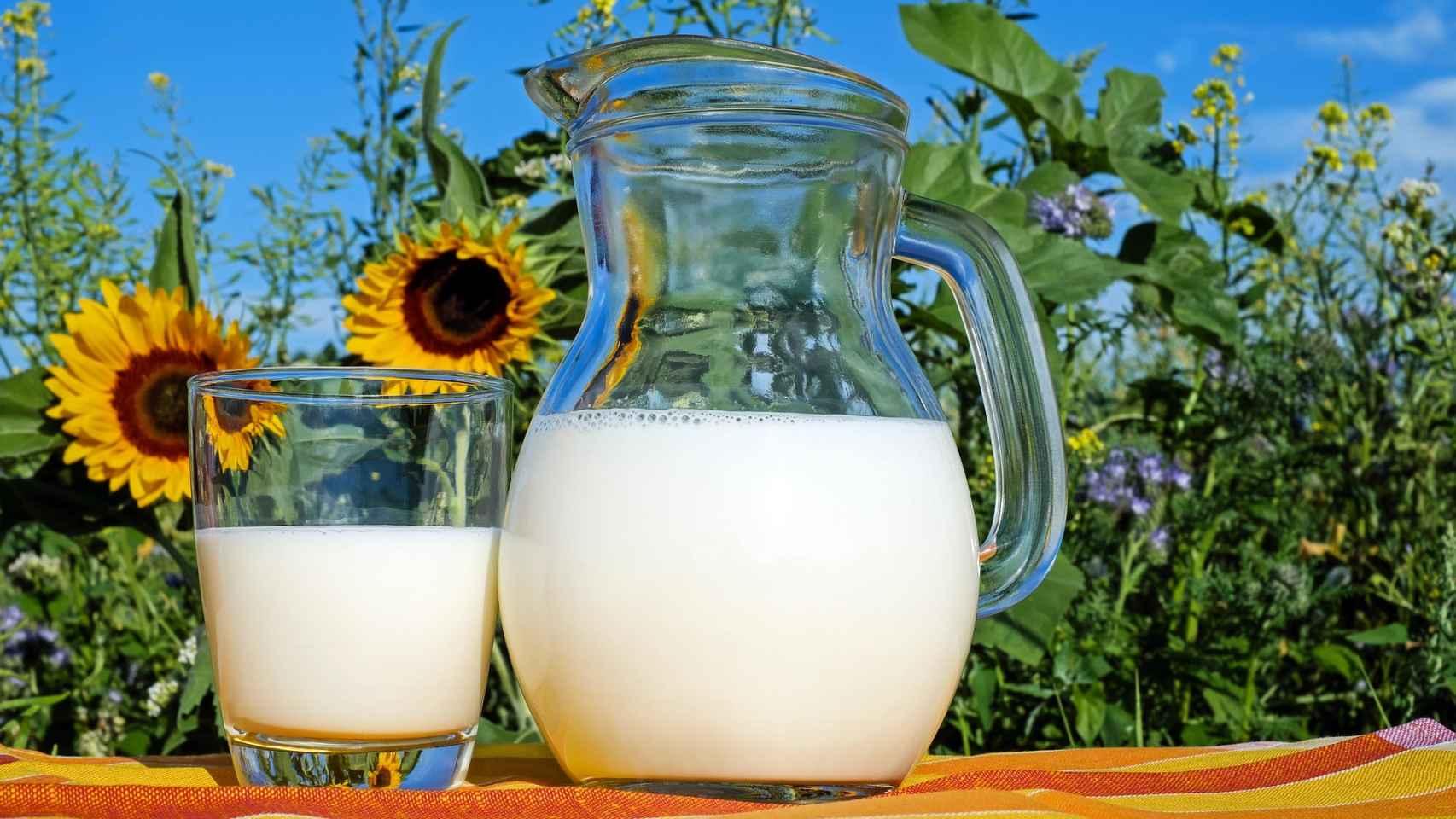 La leche y los lacteos