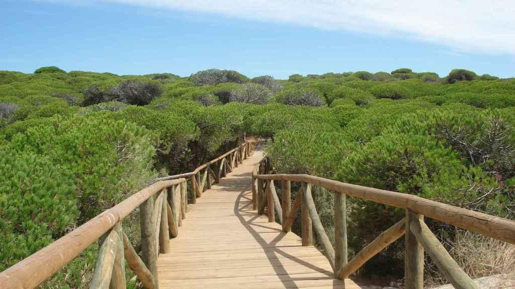 Pasarela litoral entre pinares y playa en Parque Natural de la Almadraba, Rota.