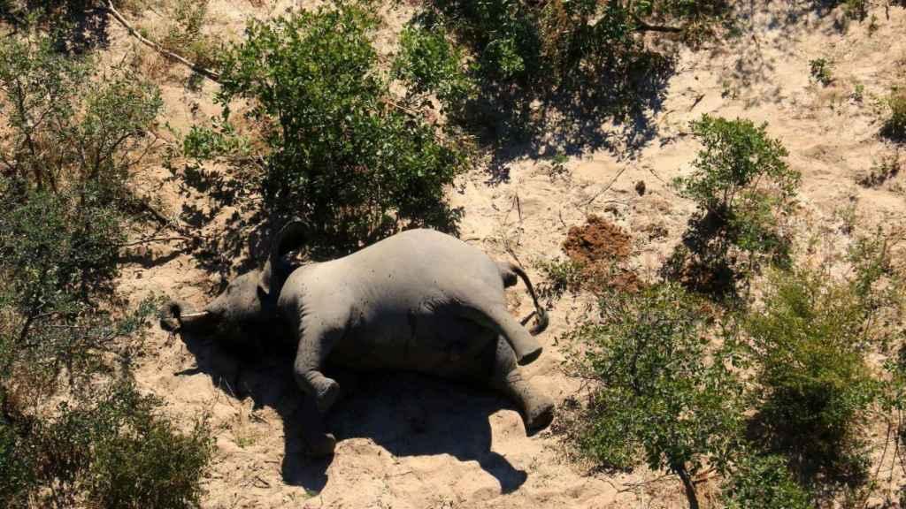Un elefante muerto en esta imagen sin fecha en el Delta del Okavango,