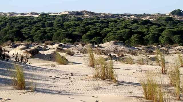 Las 5 playas más largas de España