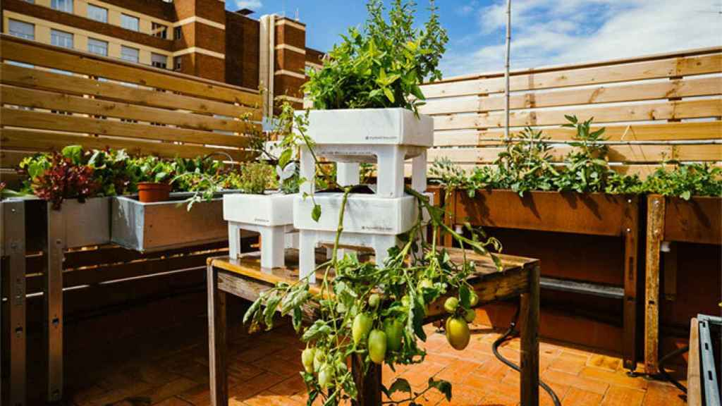 Imagen de mesa de cultivo de Ecohortum.