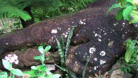 Supuestas marcas piratas en una roca de la playa Bel Ombre, en la isla de Mahé (Seychelles).