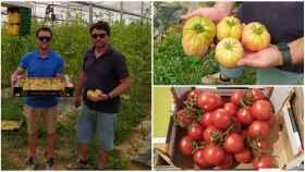 A la izquierda, Carlos y Juan Almoguera. Arriba a la derecha, su producto y, debajo, tomates convencionales de un 'súper'.