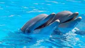 Una pareja de simpáticos delfines.