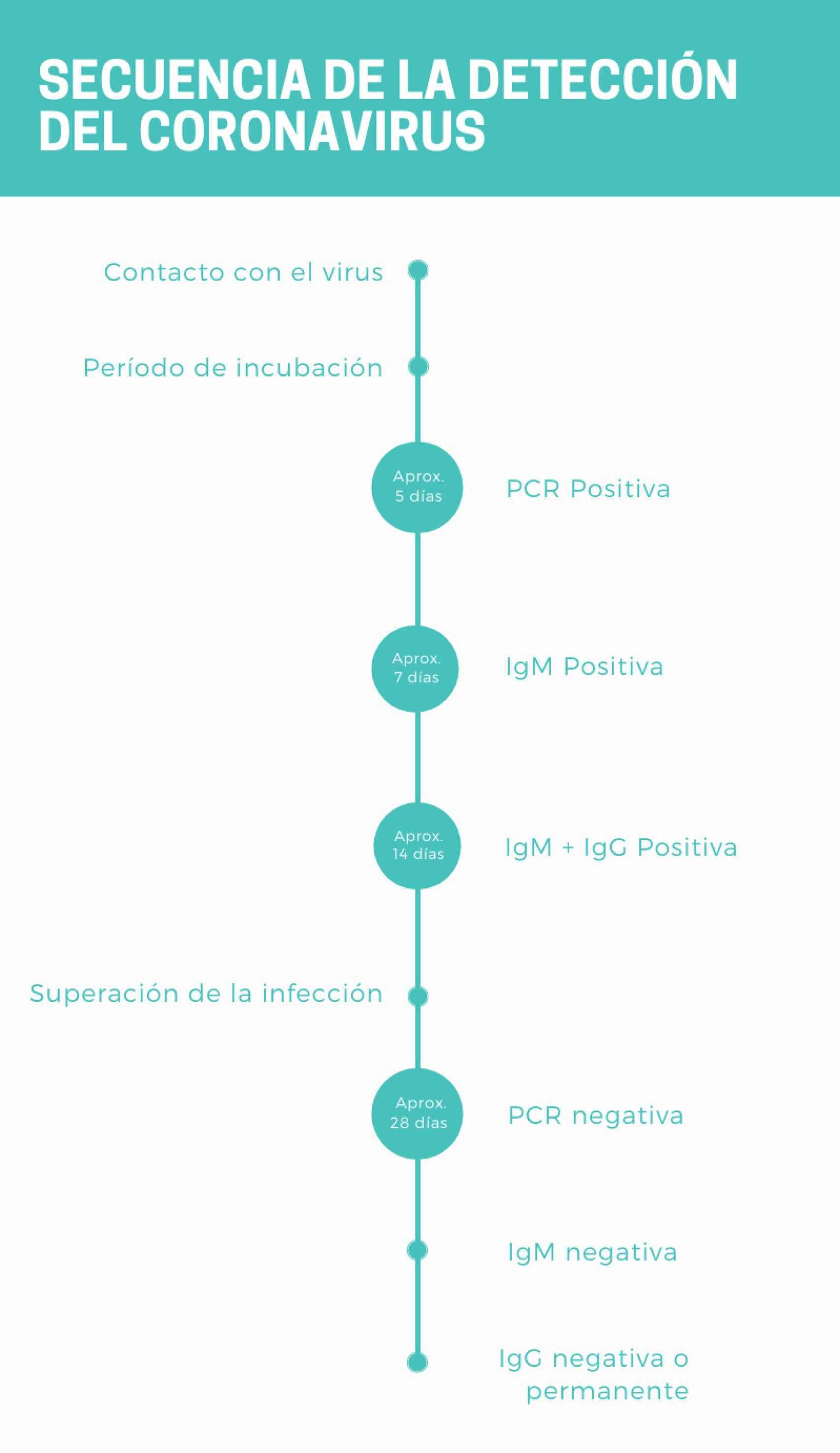 """""""La secuencia sería la siguiente: contacto con el virus, periodo de incubación (PCR negativa en un infectado); la PCR sale positiva, luego la IgM sale positiva, después aparece la IgG. Según transcurre el tiempo y se supera la infección la PCR da negativa, luego la IgM desaparece y después la IgG puede desaparecer o permanecer en el tiempo"""", según el doctor Carnevali."""