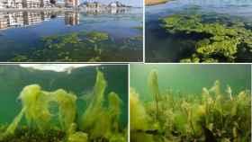 Atajar la entrada de sedimentos y nutrientes, primer paso para recuperar el Mar Menor.