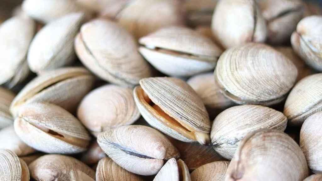 Las almejas se encuentran entre los alimentos más ricos en esta necesaria vitamina.