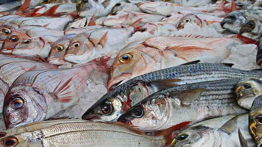 Varios ejemplares de pescado listos para vender.