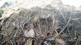 Increíble la basura que puede acumular un nido de cigüeña
