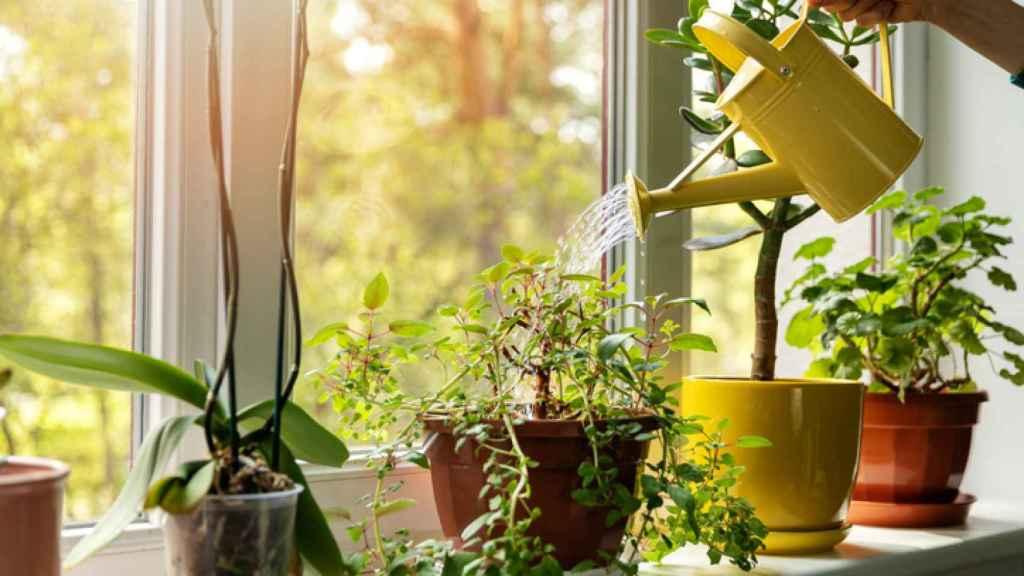 7 trucos para regar tus plantas en vacaciones