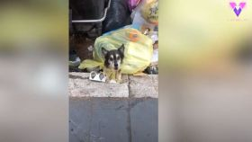 Captura de pantalla del vídeo que muestra el estado en el que fue encontrado el perro.
