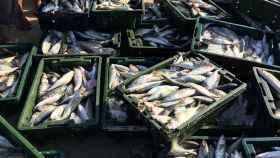 Luchar contra la pesca ilegal con tecnología blockchain