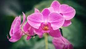 ¡Cuidados de las orquídeas en verano!