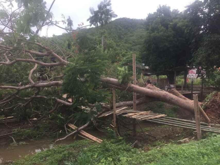 El arbol que cayó sobre el corredor Jay 'Jantaraboon' Kiangchaipaiphana