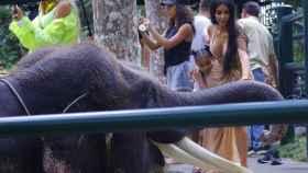 Kim Kardashiam y su hija visitando a un elefante.