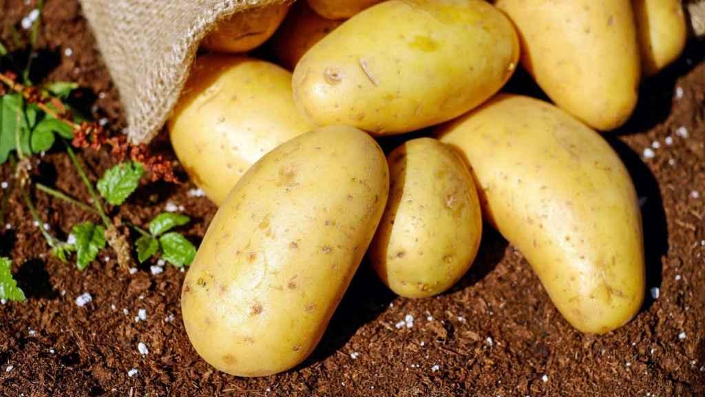 Unas cuantas patatas recién recolectadas.