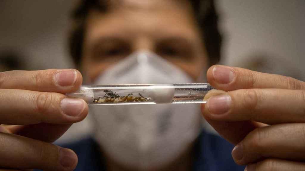 Tubo donde se almacenan las hormigas antes de entrar en la AntHouse.