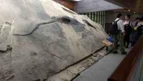 En la imagen se aprecia el contenido del estómago del ictiosaurio, que contiene el esqueleto casi completo de un talatosaurio