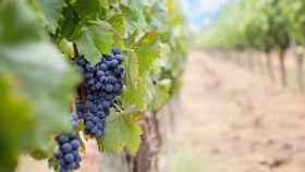 Las mejores bodegas de vino de España