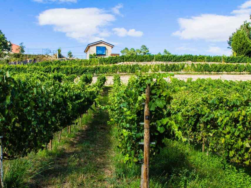 The Bargiela Bienati Winery en Pontevedra.
