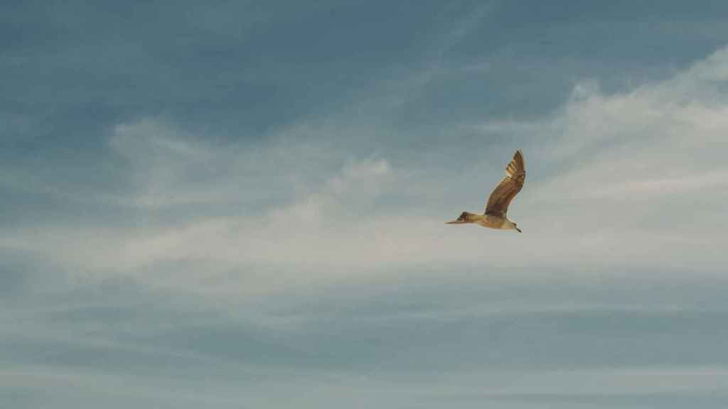 Pájaro volando.