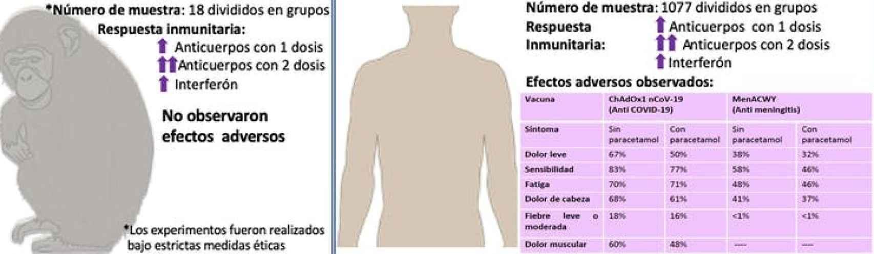 Eficacia y seguridad de la vacuna ChAdOx1 nCoV-19 en animales y en la fase I/II en humanos desarrollada por la Universidad de Oxford.