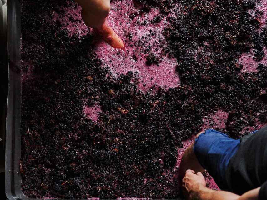 Los vinos con maceración carbónica también se llaman 'de cosechero'.