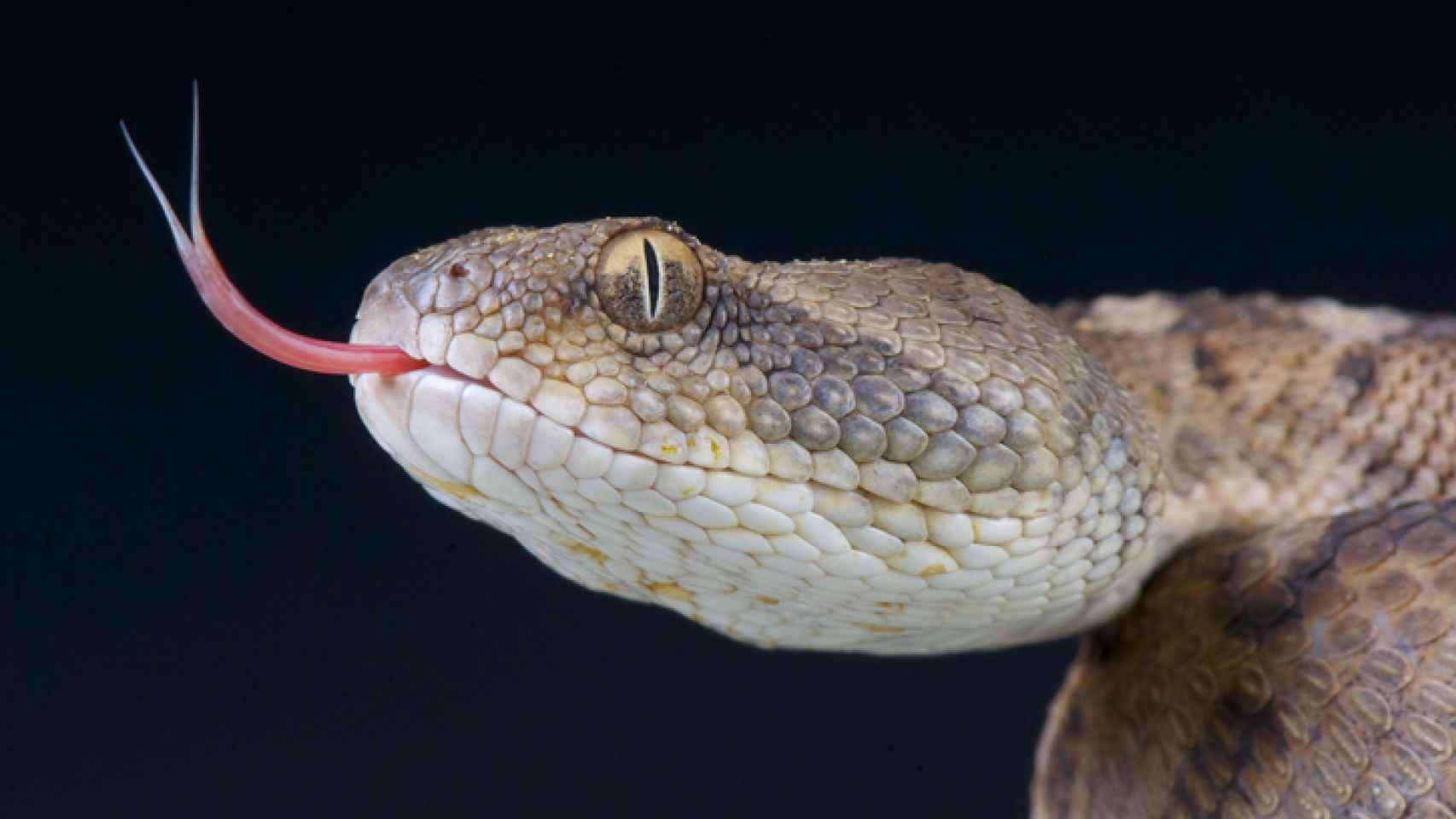 Qué Significa Soñar Con Serpientes El Significado De Los Sueños