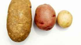 Tres tipos de patata: Kennebec, roja y nueva.