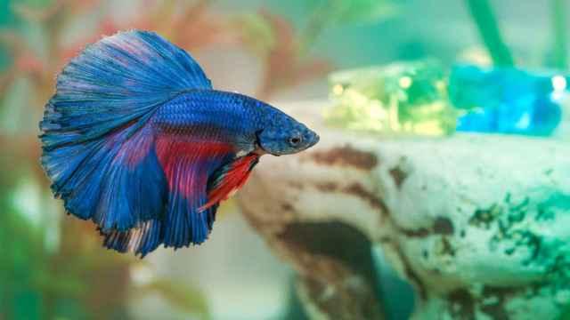 Consejos para cuidar peces en casa