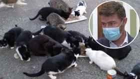 Guillermo, el concejal que ha pedido sacrificar a los gatos.