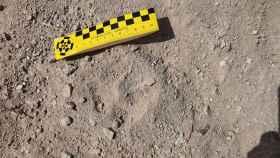 Estas son las huellas que mantienen viva la búsqueda de la pantera de Granada