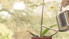 Consejos para regar tus orquídeas correctamente