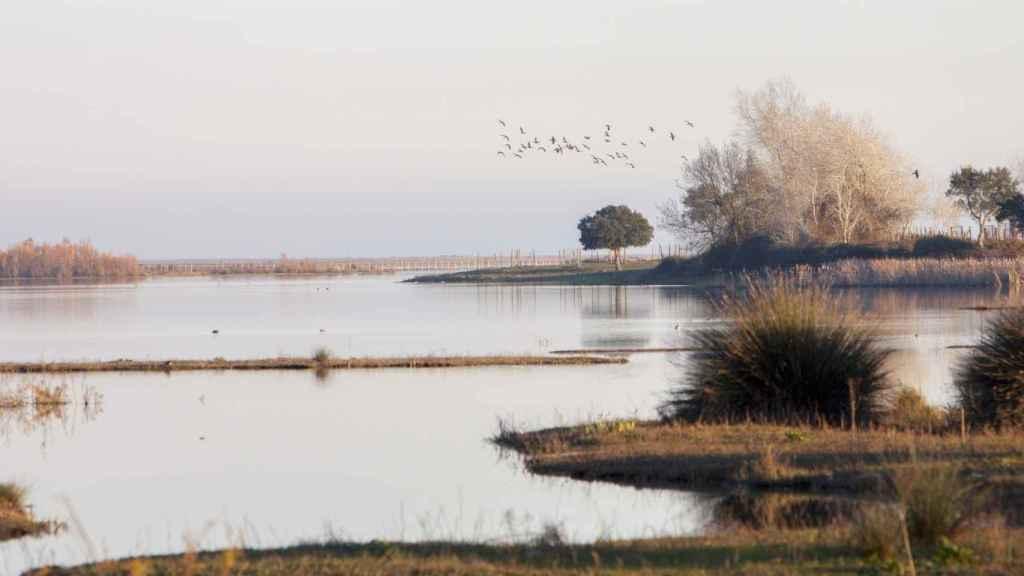 En Doñana coinciden las especies autóctonas con aves migratorias.