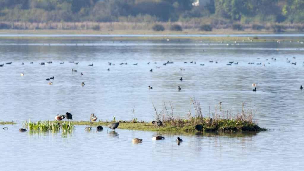 Marismas de Almonte, uno de los puntos con mayor diversidad natural del continente.