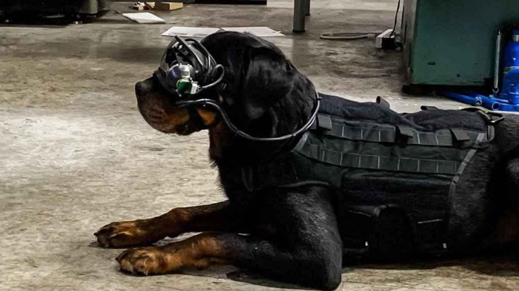 Perro militar con gafas de realidad aumentada