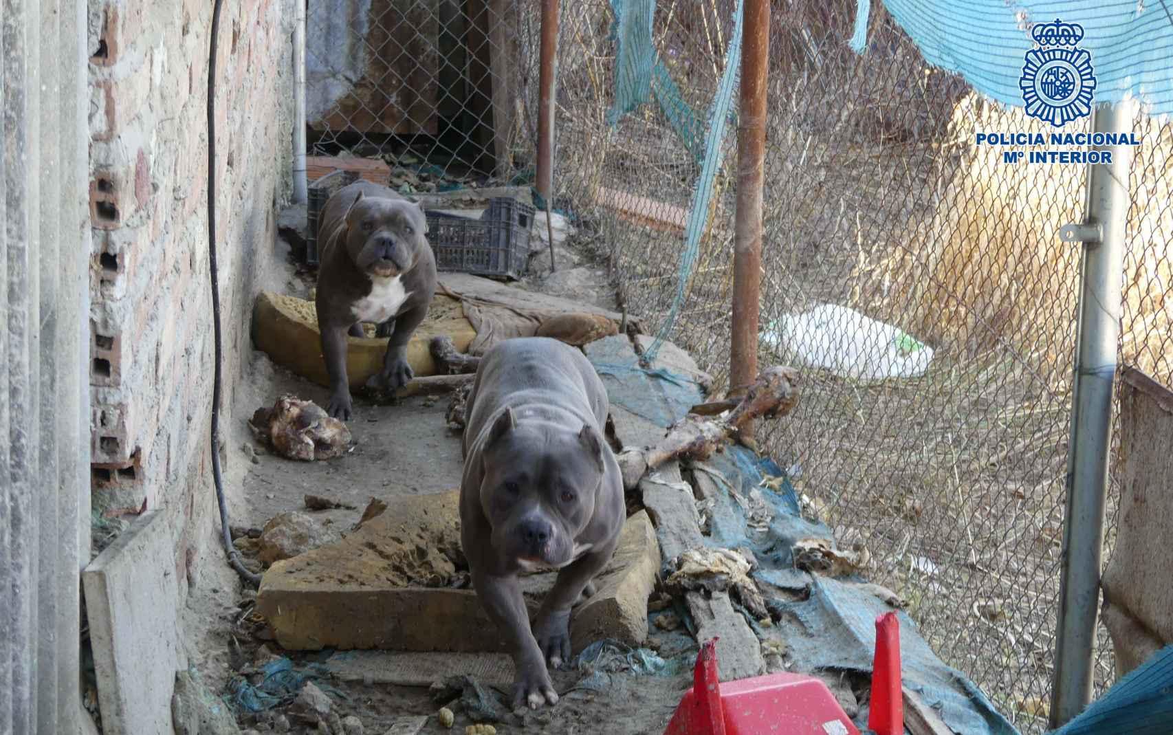 Imagen de los canes que tenía la familia.