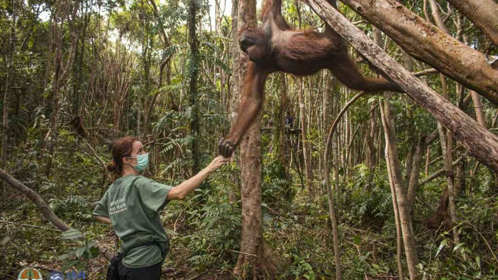 Karmele Llanos y un orangután.