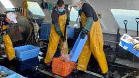 El sector pesquero insiste en reducir el IVA del pescado al 4% para aliviar la crisis
