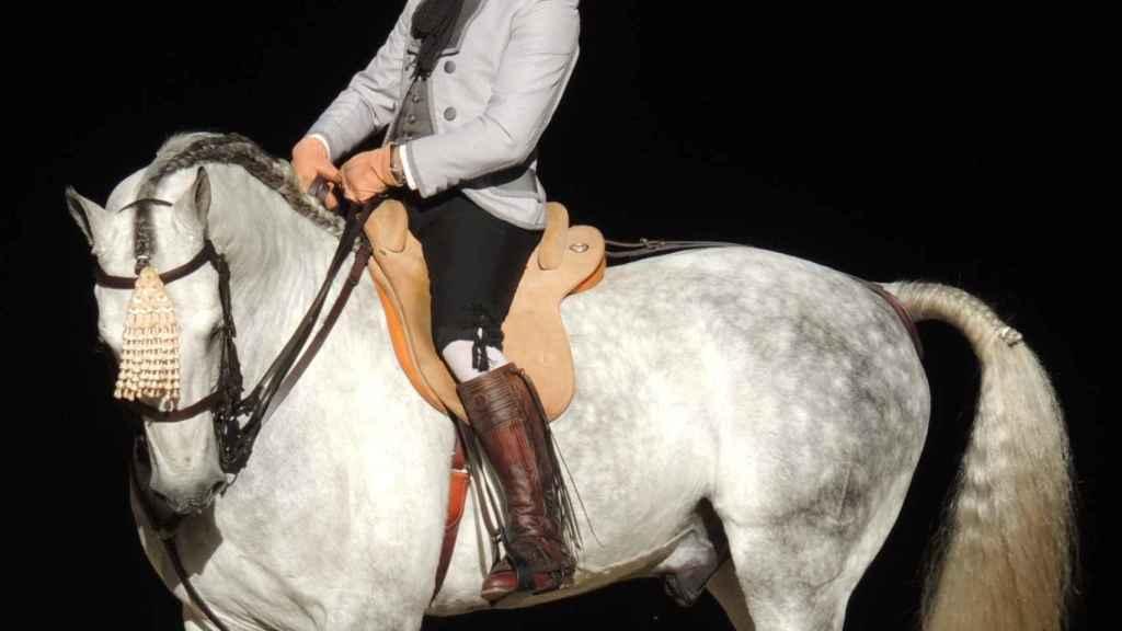 Un caballo de pura raza española en una imagen de archivo.