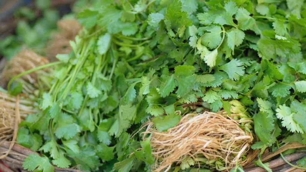 Así puedes conservar el cilantro fresco por mucho tiempo