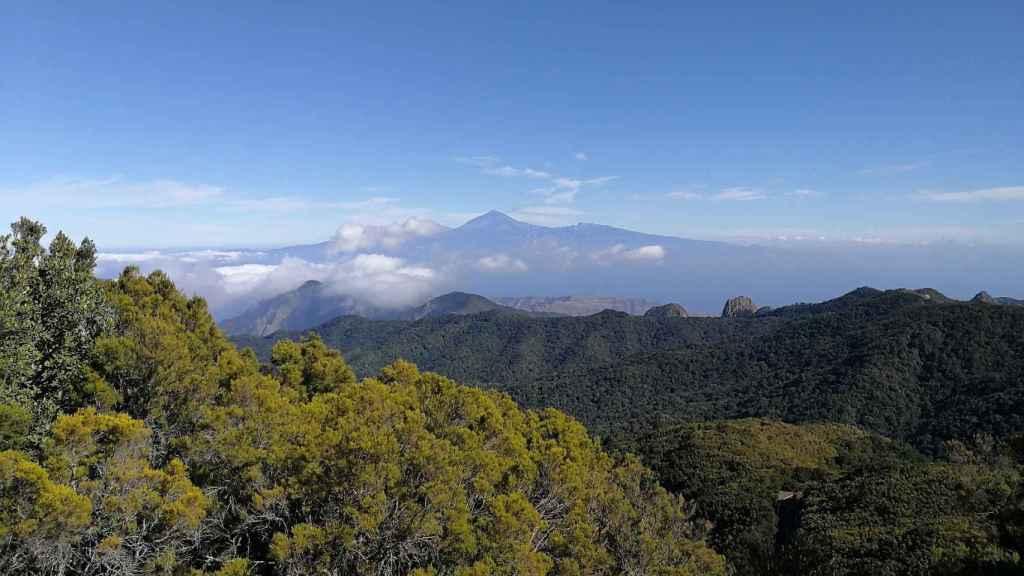 Parque Nacional de Garajonay en La Gomera.