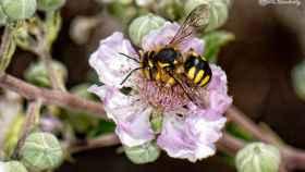 """Los expertos destacan el """"valor incalculable"""" de los insectos polinizadores."""