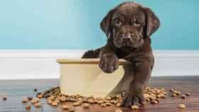 Ahorra un 40% de descuento en alimentación para mascotas