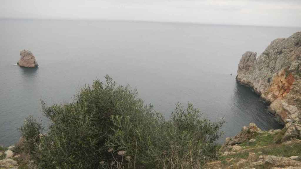 Acebuches de las Islas Medas. Antonia Ninot (IRTA).