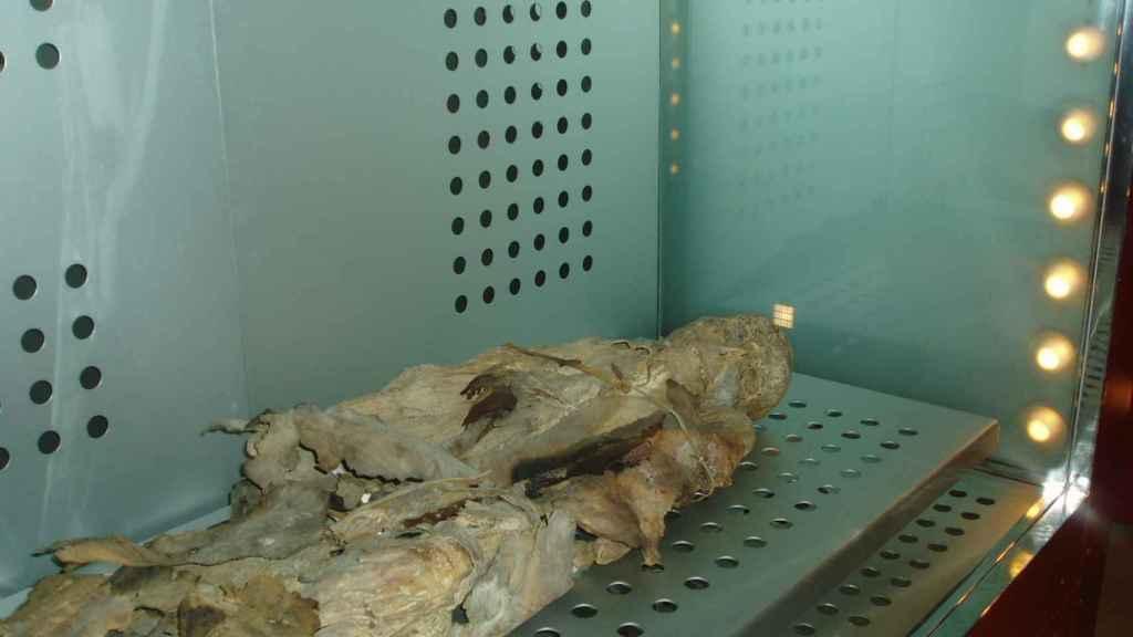 Momia guanche en el Museo de la Naturaleza y el Hombre.