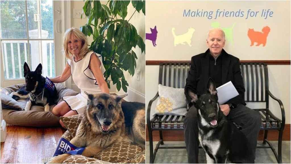 Joe y Jill Biden junto a Champ y Major, sus pastores alemanes.