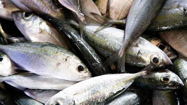 El jurel es un tipo de pescado azul.